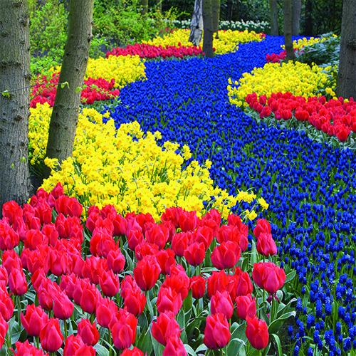 6 Tage Tulpenblüte in Holland